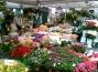 fiori-campo-de-fiori